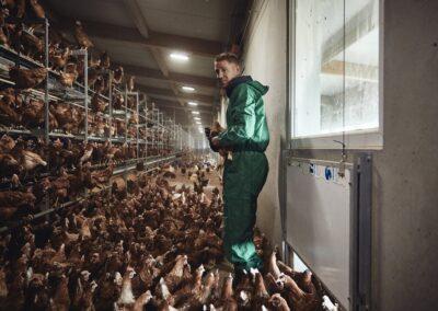 Von der Henne bis zum Supermarkt – so kommt das Ei auf den Frühstückstisch