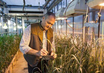 Innovative Pflanzenzucht für traditionelles Brot