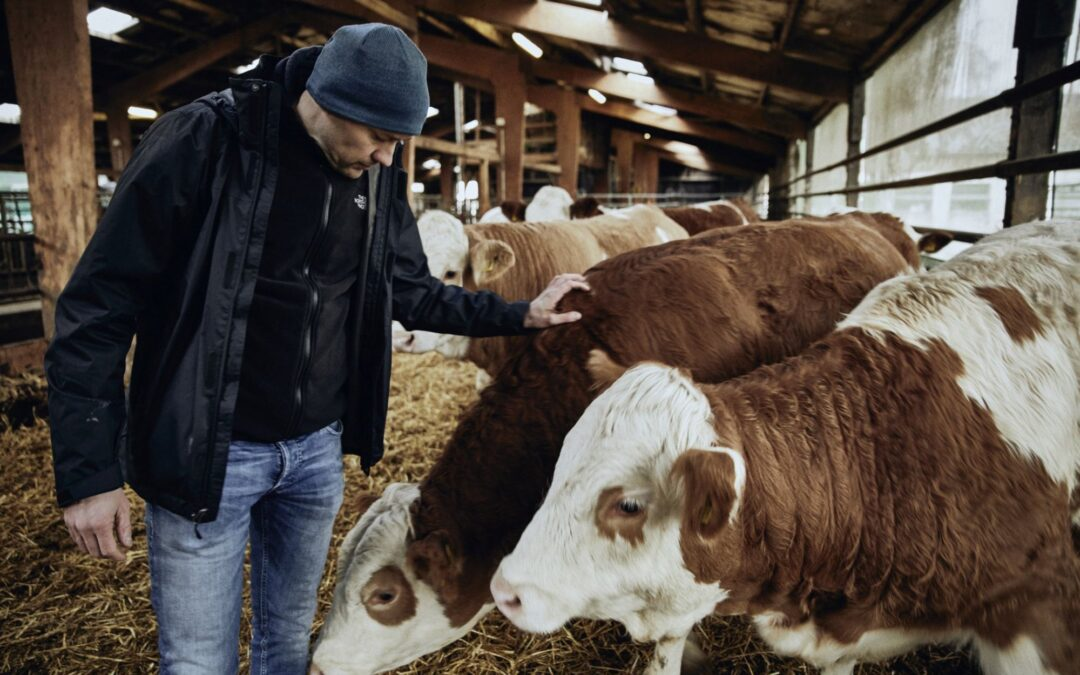 Kühe, Methan und Klimawandel